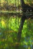 Waterbezinning bij de herfst Stock Fotografie