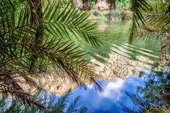 waterbezinning van palmen royalty-vrije stock afbeeldingen