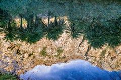 waterbezinning van palmen stock foto's