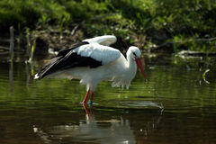 The Waterbird Stock Images