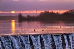 Mallard duck. Waterbird of Europe prefer living in lakes Stock Image