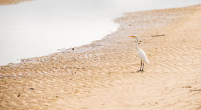 Waterbird on the shore Stock Images