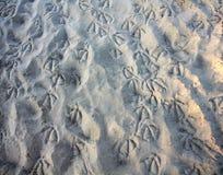 Waterbird spår på stranden arkivfoton