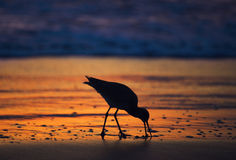 Waterbird Royalty Free Stock Images