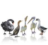 waterbirds vektor illustrationer