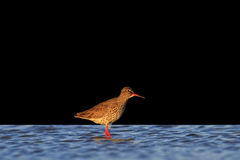Waterbirds isolated on black background Stock Images