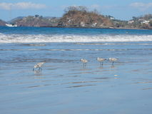 Waterbirds sur la plage Photographie stock