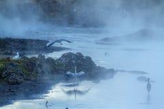 Waterbirds w Kruger parku narodowym, Południowa Afryka Zdjęcie Stock