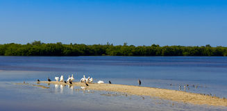 Waterbirds Royalty Free Stock Photo
