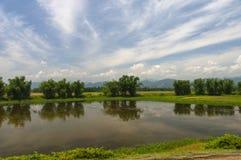 Waterbody y arboledas de bambú cerca del río Brahmaputra, Assam, la India foto de archivo