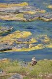 Waterbuck удара которое наслаждается этим красивым ландшафтом стоковое изображение