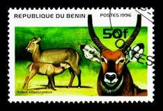 Waterbuck (Kobus ellipsiprymmus), Ungulates serie, circa 1996. MOSCOW, RUSSIA - NOVEMBER 26, 2017: A stamp printed in Benin shows Waterbuck (Kobus stock images