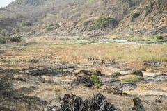 Waterbucks femelles par la rivière d'Olifants, parc national de Kruger, Afrique du Sud image stock