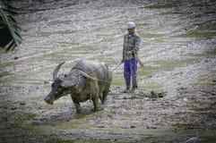 Waterbuffalo und Ploughman in Asien lizenzfreie stockbilder