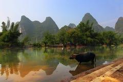 Waterbuffel Royalty-vrije Stock Afbeelding