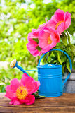 Watercan in garden Royalty Free Stock Image