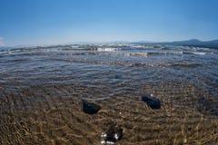 Waterclose-up, Meer Tahoe royalty-vrije stock foto's