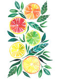 Watercolo orange de modèle de grapeftuit de citron d'agrume tropical lumineux Photos stock