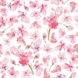 Watercolo seamles sakura flower pattern. Watercolor sakura flower pattern. Cherry flower seamless texture on white background Royalty Free Stock Image