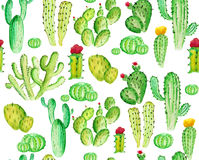 Watercoloe cactus seamles pattern Stock Photos