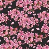 Watercolor άνευ ραφής σχέδιο κλάδων δέντρων κερασιών άνοιξη ανθίζοντας απεικόνιση αποθεμάτων