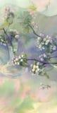 Watercolor άνθισης δέντρων της Apple Στοκ Εικόνες