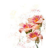 Watercolor ανθών ημέρα-κρίνων Στοκ εικόνα με δικαίωμα ελεύθερης χρήσης
