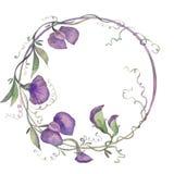 Watercolor απεικόνισης στεφανιών ευώδης ανθοδέσμη φύλλων λουλουδιών μπιζελιών πορφυρή ελεύθερη απεικόνιση δικαιώματος