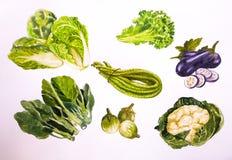 Watercolor απεικόνισης Backgronds Vegetabl Στοκ εικόνα με δικαίωμα ελεύθερης χρήσης