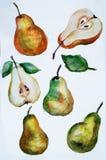 Watercolor αχλαδιών Στοκ εικόνα με δικαίωμα ελεύθερης χρήσης
