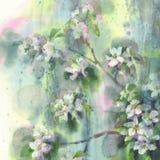Watercolor βροχής λουλουδιών δέντρων της Apple Στοκ Εικόνα