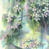 Watercolor βροχής λουλουδιών δέντρων της Apple Στοκ φωτογραφίες με δικαίωμα ελεύθερης χρήσης