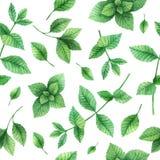 Watercolor διανυσματική άνευ ραφής μέντα χορταριών σχεδίων συρμένη χέρι Στοκ εικόνα με δικαίωμα ελεύθερης χρήσης