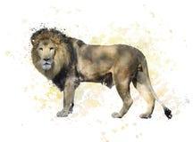 Watercolor λιονταριών Στοκ Φωτογραφίες