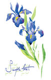 watercolor λουλουδιών Στοκ Φωτογραφίες