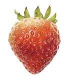 Watercolor με μια φράουλα Στοκ εικόνα με δικαίωμα ελεύθερης χρήσης