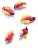 Watercolor με τα πέταλα τουλιπών στο λευκό Στοκ φωτογραφία με δικαίωμα ελεύθερης χρήσης