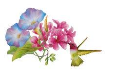 Watercolor με τη δόξα πρωινού και ρόδινο mallow διανυσματική απεικόνιση