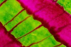 Watercolor με τις πράσινες και ρόδινες διαγώνιες γραμμές νέου Στοκ εικόνα με δικαίωμα ελεύθερης χρήσης