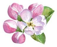 Watercolor με το δέντρο μηλιάς στο άνθος Στοκ εικόνα με δικαίωμα ελεύθερης χρήσης