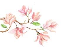 Watercolor με το λουλούδι Magnolia Στοκ εικόνες με δικαίωμα ελεύθερης χρήσης