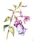 Watercolor με το φούξια Στοκ εικόνα με δικαίωμα ελεύθερης χρήσης