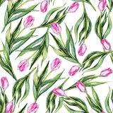 Watercolor λουλουδιών floral ρόδινο υπόβαθρο σχεδίων τουλιπών άνευ ραφής Στοκ φωτογραφίες με δικαίωμα ελεύθερης χρήσης