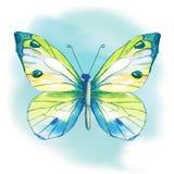 Watercolor πεταλούδων επίσης corel σύρετε το διάνυσμα απεικόνισης Στοκ Φωτογραφίες