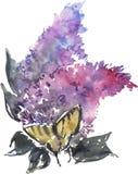 Watercolor που σύρει την μπλε πασχαλιά και την πεταλούδα Στοκ Εικόνα
