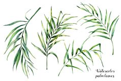 Watercolor που τίθεται με τα τροπικά φύλλα φοινικών Χρωματισμένος χέρι εξωτικός κλάδος πρασινάδων καρύδων στο άσπρο υπόβαθρο βοτα διανυσματική απεικόνιση