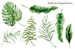 Watercolor που τίθεται με τα τροπικά φύλλα Χρωματισμένος χέρι κλάδος, φτέρη και φύλλο παλαμών του magnolia Εγκαταστάσεις που απομ