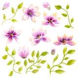 Watercolor που χρωματίζει την τέχνη διακοσμήσεων ταπετσαριών λουλουδιών ανθών Magnolia Συρμένη χέρι απομονωμένη floral απεικόνιση Στοκ Φωτογραφίες