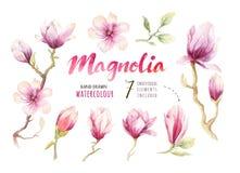 Watercolor που χρωματίζει τη διακόσμηση ταπετσαριών λουλουδιών ανθών Magnolia Στοκ Φωτογραφία