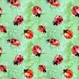 Watercolor που χρωματίζεται ladybugs ελεύθερη απεικόνιση δικαιώματος